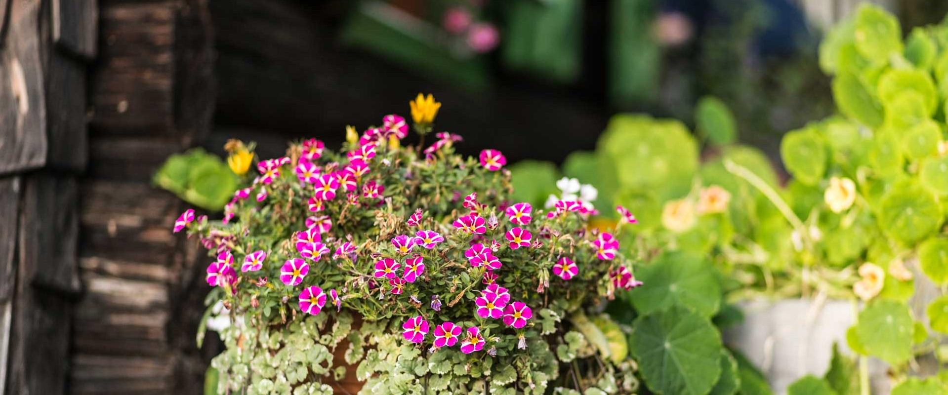 Blumenkistl
